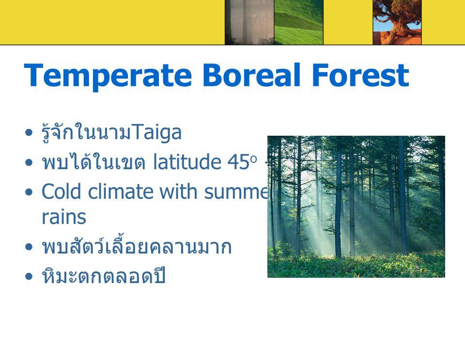 Temperate Boreal Forest รู้จักในนาม Taiga พบได้ในเขต latitude 45 o - 60 o Cold climate with summer rains พบสัตว์เลื้อยคลานมาก หิมะตกตลอดปี