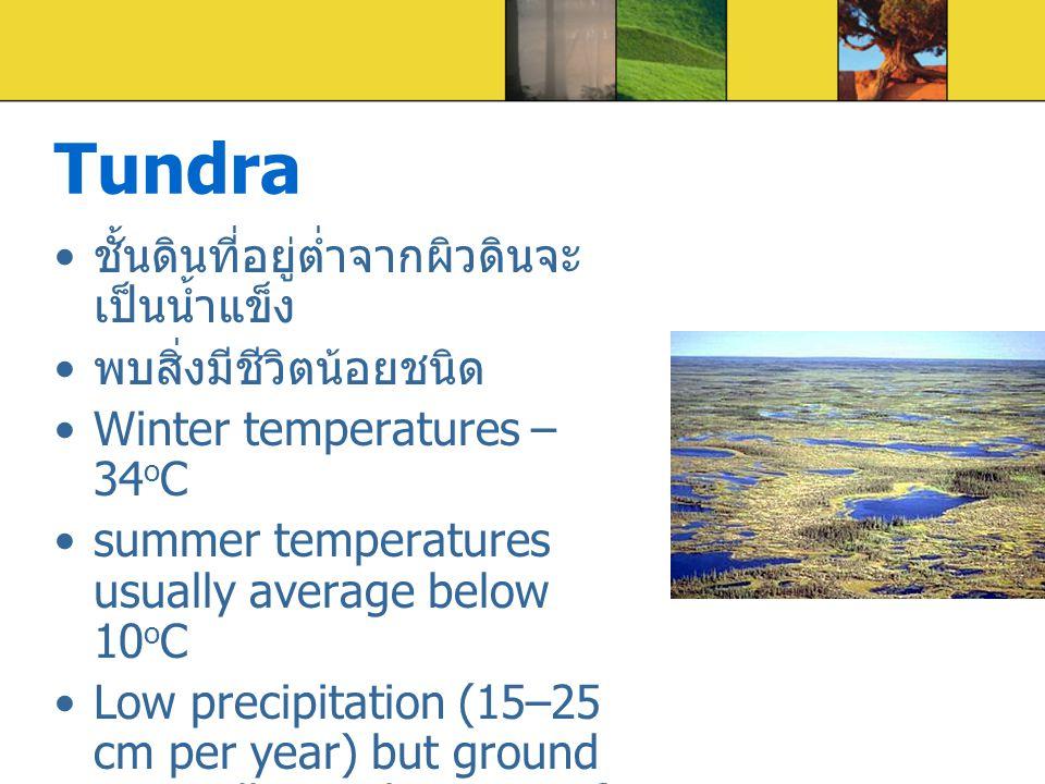 Tundra ชั้นดินที่อยู่ต่ำจากผิวดินจะ เป็นน้ำแข็ง พบสิ่งมีชีวิตน้อยชนิด Winter temperatures – 34 o C summer temperatures usually average below 10 o C Lo