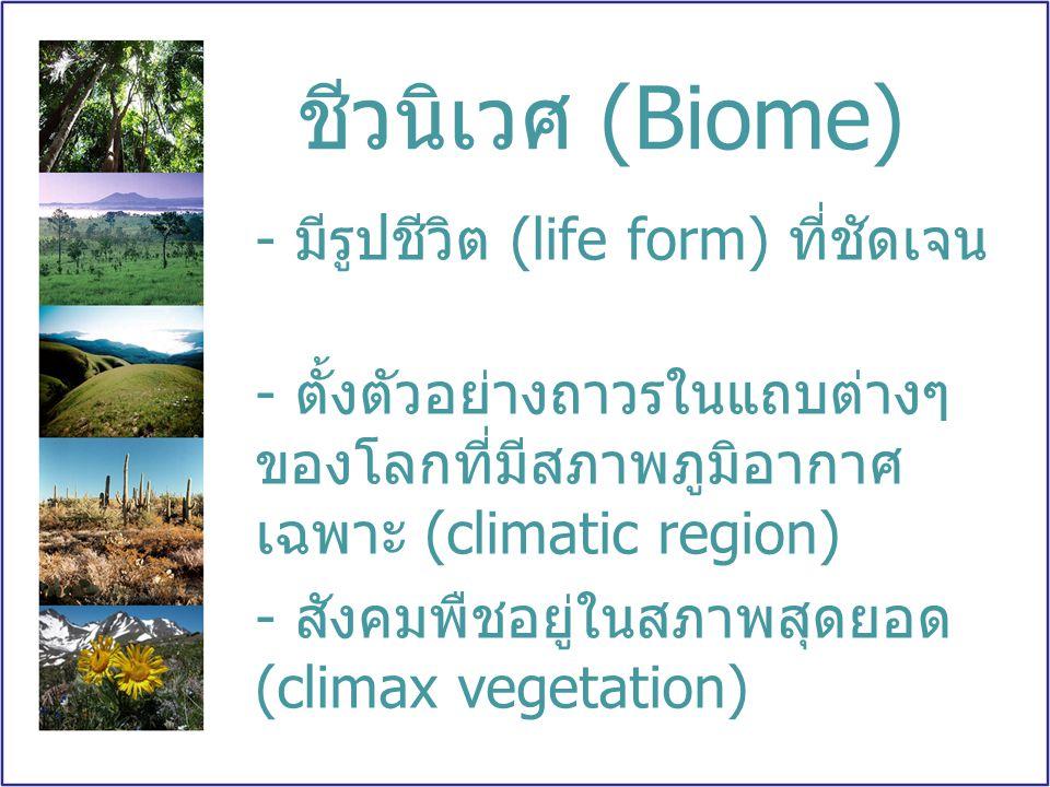 ชีวนิเวศ (Biome) - มีรูปชีวิต (life form) ที่ชัดเจน - ตั้งตัวอย่างถาวรในแถบต่างๆ ของโลกที่มีสภาพภูมิอากาศ เฉพาะ (climatic region) - สังคมพืชอยู่ในสภาพ