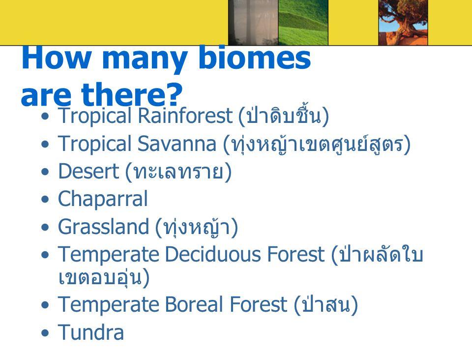 Tropical Rainforest ( ป่าดิบชื้น ) Tropical Savanna ( ทุ่งหญ้าเขตศูนย์สูตร ) Desert ( ทะเลทราย ) Chaparral Grassland ( ทุ่งหญ้า ) Temperate Deciduous