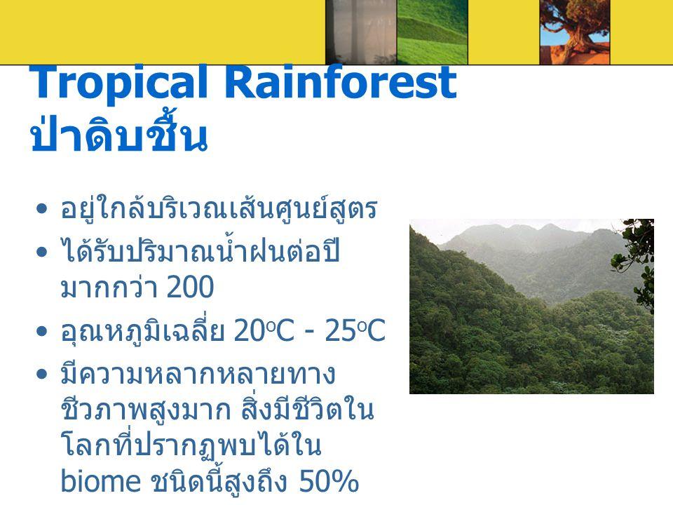 Tropical Rainforest ป่าดิบชื้น อยู่ใกล้บริเวณเส้นศูนย์สูตร ได้รับปริมาณน้ำฝนต่อปี มากกว่า 200 อุณหภูมิเฉลี่ย 20 o C - 25 o C มีความหลากหลายทาง ชีวภาพส