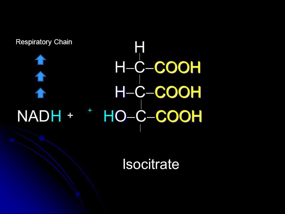 COOH C  COOH HCOOH H  C  COOH OCOOH O  C  COOH H HH Isocitrate HHNAD + Respiratory Chain +
