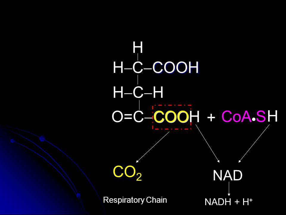 COOH C  COOH HCHHCH O=C  H HH CoA  S + CO 2 NAD NADH + H + COOH H Respiratory Chain