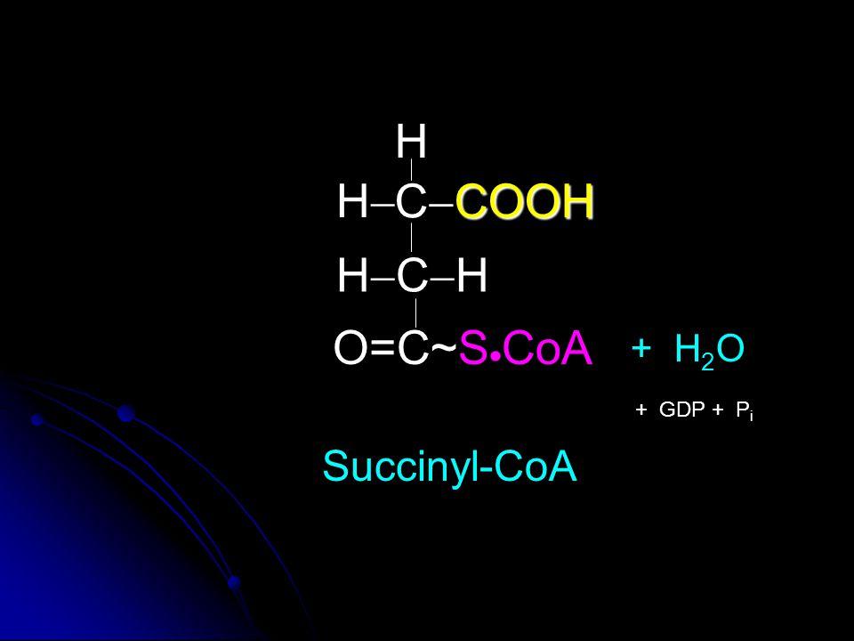 COOH C  COOH HCHHCH O=C~S  CoA H HH Succinyl-CoA + H 2 O + GDP + P i
