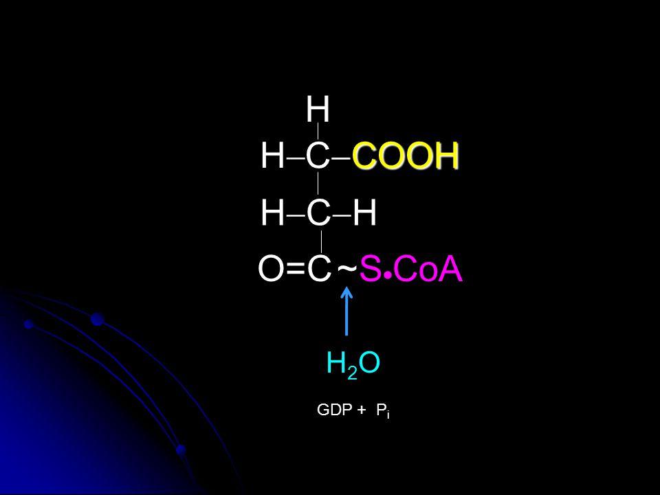 COOH C  COOH HCHHCH O=C H HH H2OH2O GDP + P i S  CoA~