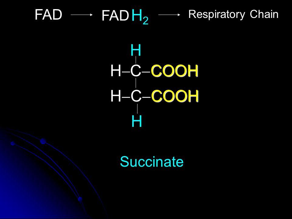 COOH C  COOH COOH H  C  COOH H HH Succinate H FAD Respiratory Chain H2H2