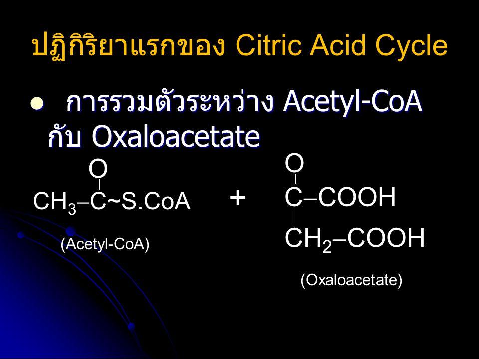ปฏิกิริยาแรกของ Citric Acid Cycle การรวมตัวระหว่าง Acetyl-CoA กับ Oxaloacetate การรวมตัวระหว่าง Acetyl-CoA กับ Oxaloacetate C  COOH CH 2  COOH  O