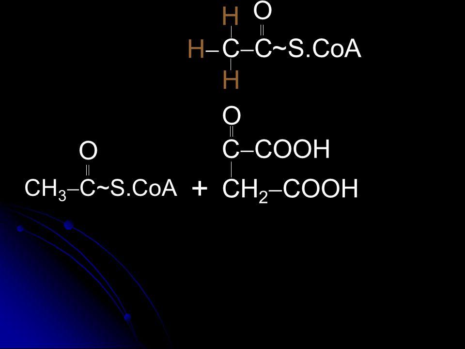 C  COOH CH 2  COOH  O + CH 3  C~S.CoA  O CCCC O HH H S.CoA~ H