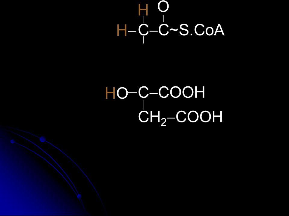 C  COOH CH 2  COOH O CCCC  O HH H S.CoA~ H