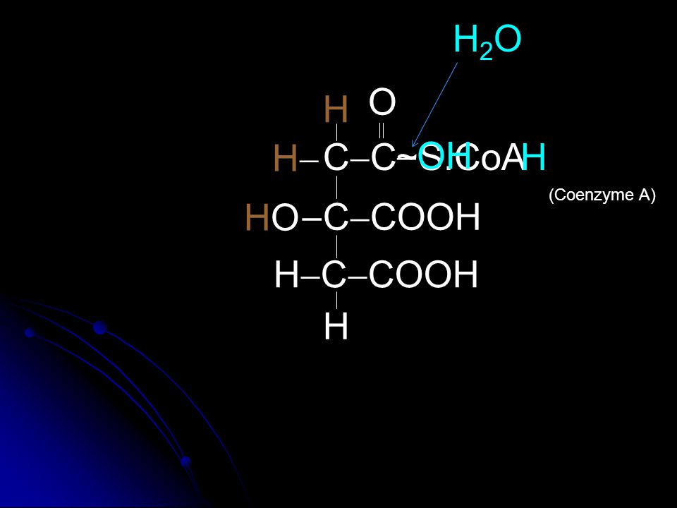 C  COOH CCCC  O H2OH2O HOHO  HH H H  C  COOH H S.CoA~  OH H (Coenzyme A)