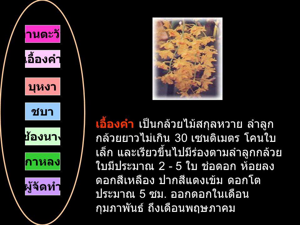 เอื้องคำ เป็นกล้วยไม้สกุลหวาย ลำลูก กล้วยยาวไม่เกิน 30 เซนติเมตร โคนใบ เล็ก และเรียวขึ้นไปมีร่องตามลำลูกกล้วย ใบมีประมาณ 2 - 5 ใบ ช่อดอก ห้อยลง ดอกสีเหลือง ปากสีแดงเข้ม ดอกโต ประมาณ 5 ซม.