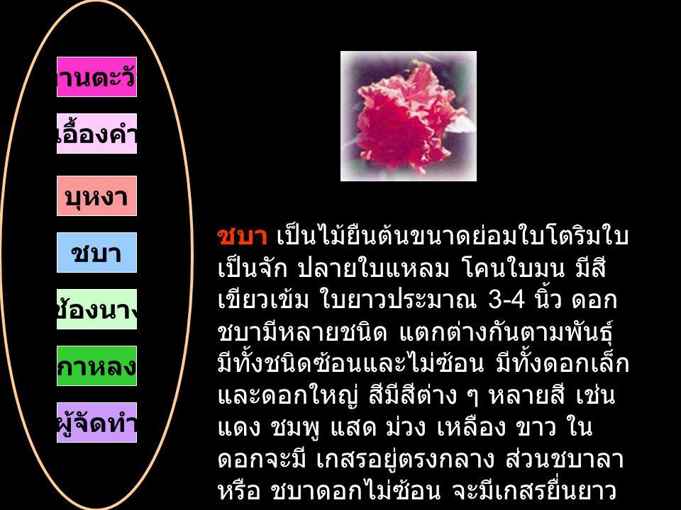 ชบา เป็นไม้ยืนต้นขนาดย่อมใบโตริมใบ เป็นจัก ปลายใบแหลม โคนใบมน มีสี เขียวเข้ม ใบยาวประมาณ 3-4 นิ้ว ดอก ชบามีหลายชนิด แตกต่างกันตามพันธุ์ มีทั้งชนิดซ้อนและไม่ซ้อน มีทั้งดอกเล็ก และดอกใหญ่ สีมีสีต่าง ๆ หลายสี เช่น แดง ชมพู แสด ม่วง เหลือง ขาว ใน ดอกจะมี เกสรอยู่ตรงกลาง ส่วนชบาลา หรือ ชบาดอกไม่ซ้อน จะมีเกสรยื่นยาว ออกมานอกดอก ทานตะวัน เอื้องคำ บุหงา ชบา กาหลง ช้องนาง ผู้จัดทำ