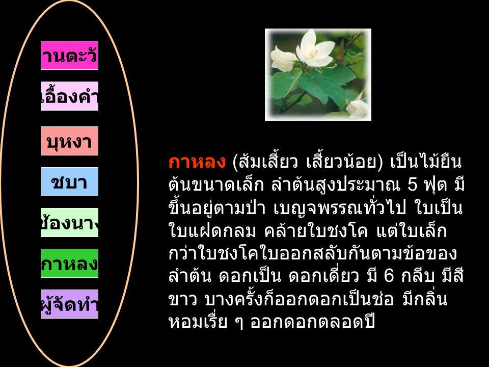 กาหลง ( ส้มเสี้ยว เสี้ยวน้อย ) เป็นไม้ยืน ต้นขนาดเล็ก ลำต้นสูงประมาณ 5 ฟุต มี ขึ้นอยู่ตามป่า เบญจพรรณทั่วไป ใบเป็น ใบแฝดกลม คล้ายใบชงโค แต่ใบเล็ก กว่าใบชงโคใบออกสลับกันตามข้อของ ลำต้น ดอกเป็น ดอกเดี่ยว มี 6 กลีบ มีสี ขาว บางครั้งก็ออกดอกเป็นช่อ มีกลิ่น หอมเรื่ย ๆ ออกดอกตลอดปี ทานตะวัน เอื้องคำ บุหงา ชบา กาหลง ช้องนาง ผู้จัดทำ