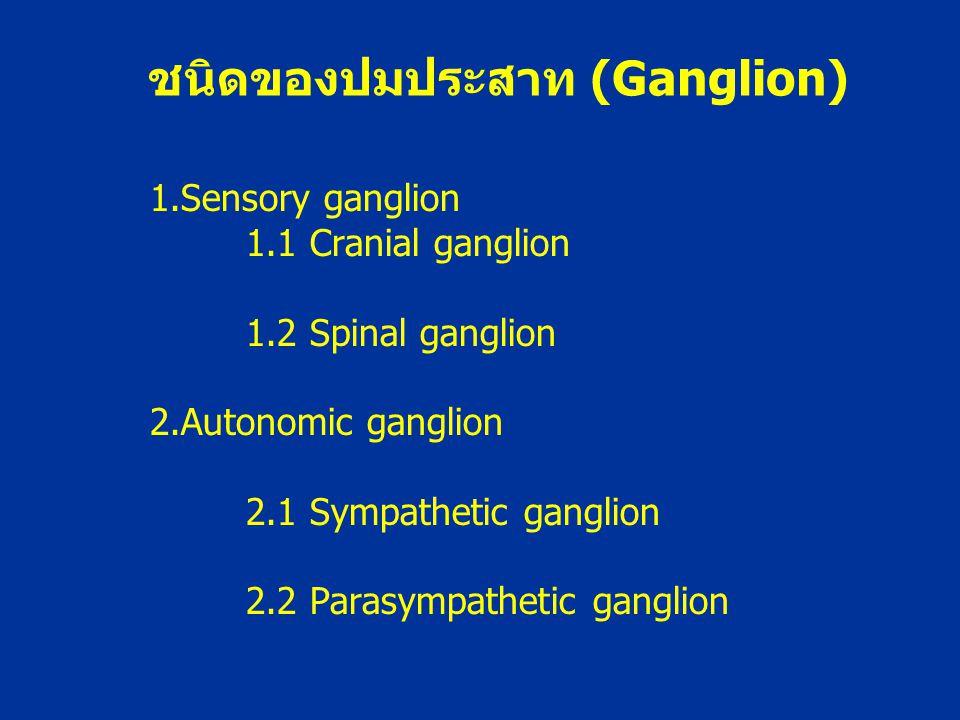 1.Sensory ganglion 1.1 Cranial ganglion 1.2 Spinal ganglion 2.Autonomic ganglion 2.1 Sympathetic ganglion 2.2 Parasympathetic ganglion ชนิดของปมประสาท