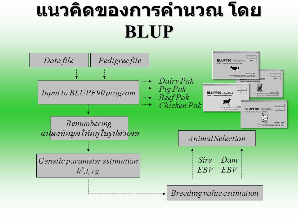 แนวคิดของการคำนวณ โดย BLUP Data filePedigree file Input to BLUPF90 program Renumbering แปลงข้อมูลให้อยู่ในรูปตัวเลข Genetic parameter estimation h 2,t