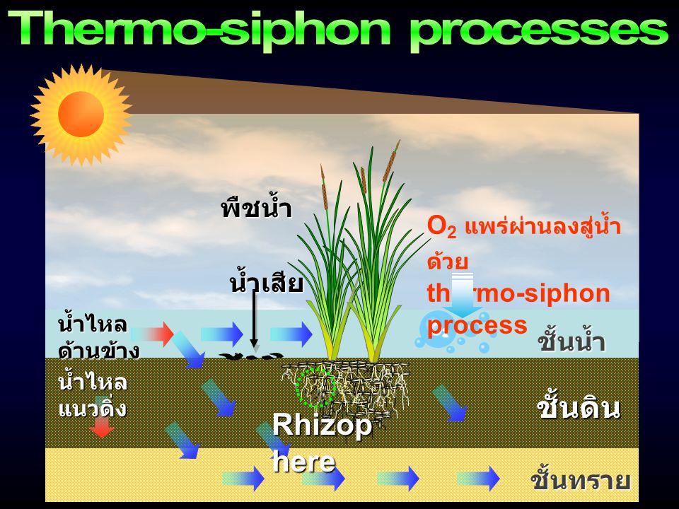 ชั้นน้ำ ชั้นดิน ชั้นทราย น้ำไหล ด้านข้าง น้ำไหล แนวดิ่ง น้ำเสีย พืชน้ำ O2O2O2O2 O 2 แพร่ผ่านลงสู่น้ำ ด้วย thermo-siphon process Rhizop here