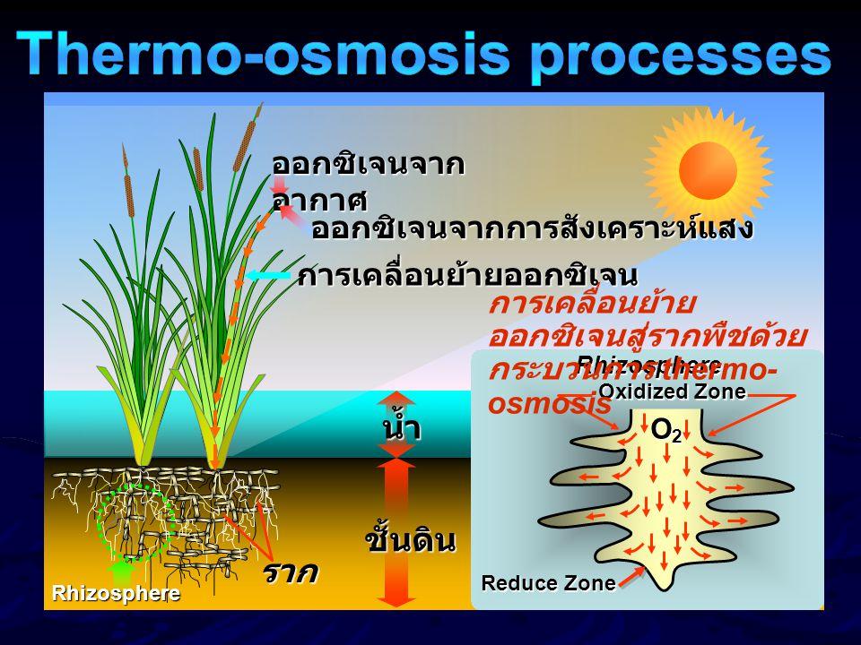 ออกซิเจนจาก อากาศ ออกซิเจนจากการสังเคราะห์แสง น้ำ ชั้นดิน การเคลื่อนย้ายออกซิเจน Rhizosphere ราก Reduce Zone Oxidized Zone O2O2O2O2 Rhizosphere การเคล