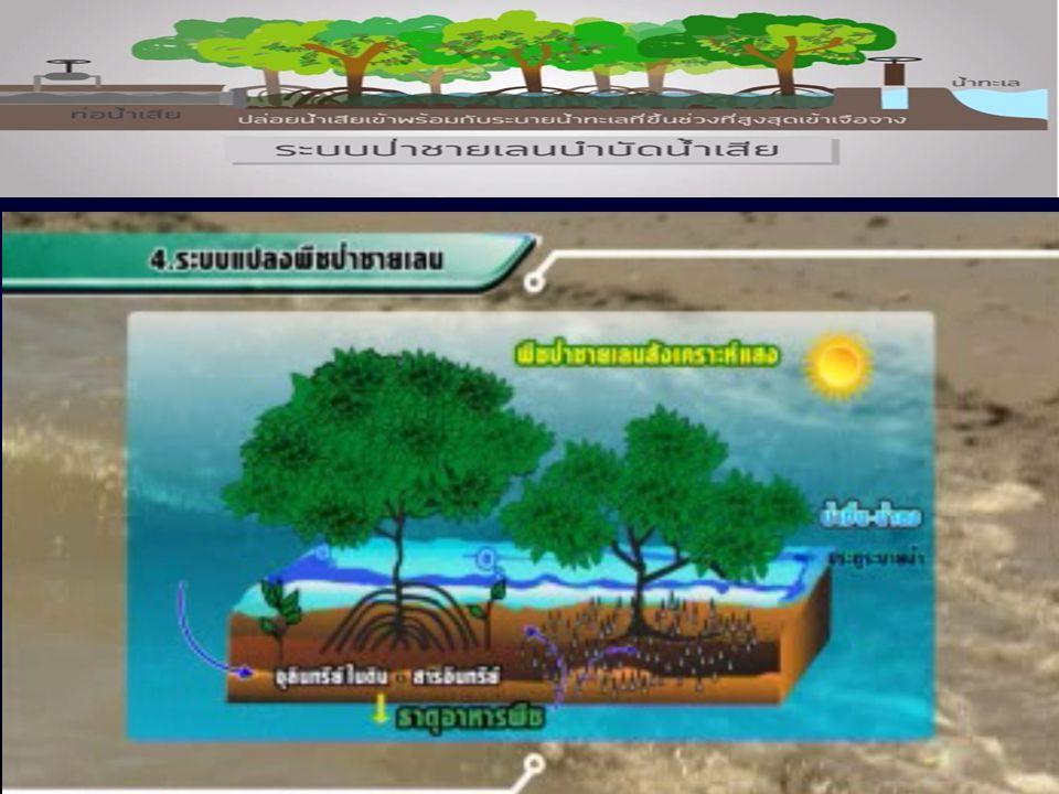 การใช้พื้นที่ป่าชายเลนเสื่อมโทรมมาปรับปรุง โดยสร้างคันดินล้อมรอบ ระบายน้ำทะเลที่ขึ้นช่วงที่ สูงสุดเข้า พร้อมกับปล่อยน้ำเสียเข้าเจือจาง กักไว้จนกระทั่ง เริ่มช่วงที่น้ำลงต่ำสุด จึงระบาย ออกพร้อมกับน้ำเริ่มลดระดับลง ปริมาณน้ำที่บำบัด ได้ขึ้นอยู่กับขนาดของพื้นที่