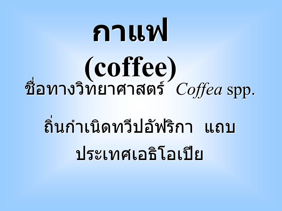 เริ่มจากคนเลี้ยงแพะ สังเกตุ เห็นแพะกินใบและผลกาแฟแล้วมี อาการสดชื่น จึงรับประทานบ้าง ชาวอาหรับ เผยแพร่การ บริโภคเมล็ดกาแฟ แถบประเทศ ใกล้ทะเลเมดีเตอร์เรเนียน การใช้ประโยชน์