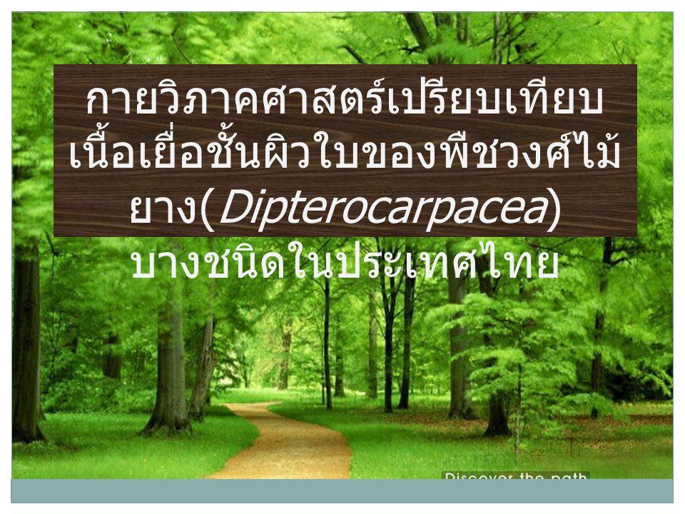 กายวิภาคศาสตร์เปรียบเทียบ เนื้อเยื่อชั้นผิวใบของพืชวงศ์ไม้ ยาง (Dipterocarpacea) บางชนิดในประเทศไทย