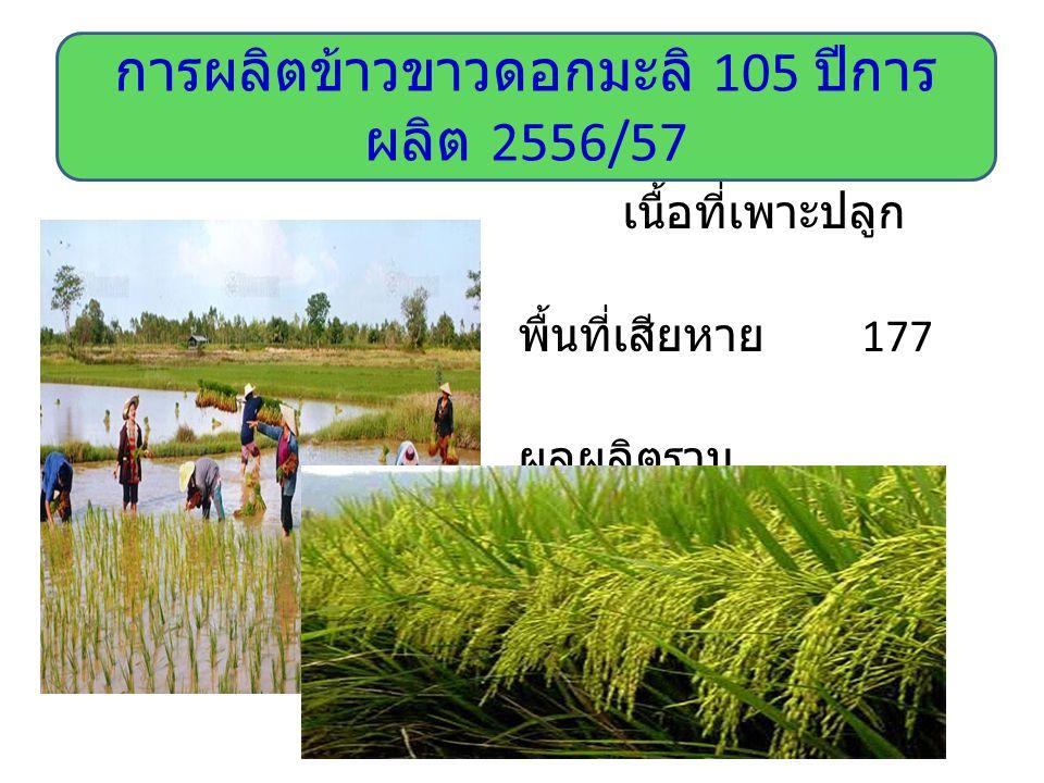เนื้อที่เพาะปลูก 17,159 ไร่ พื้นที่เสียหาย 177 ไร่ ผลผลิตรวม 6,758.84 ตัน ผลผลิตเฉลี่ย 398 กิโลกรัม / ไร่ การผลิตข้าวขาวดอกมะลิ 105 ปีการ ผลิต 2556/57
