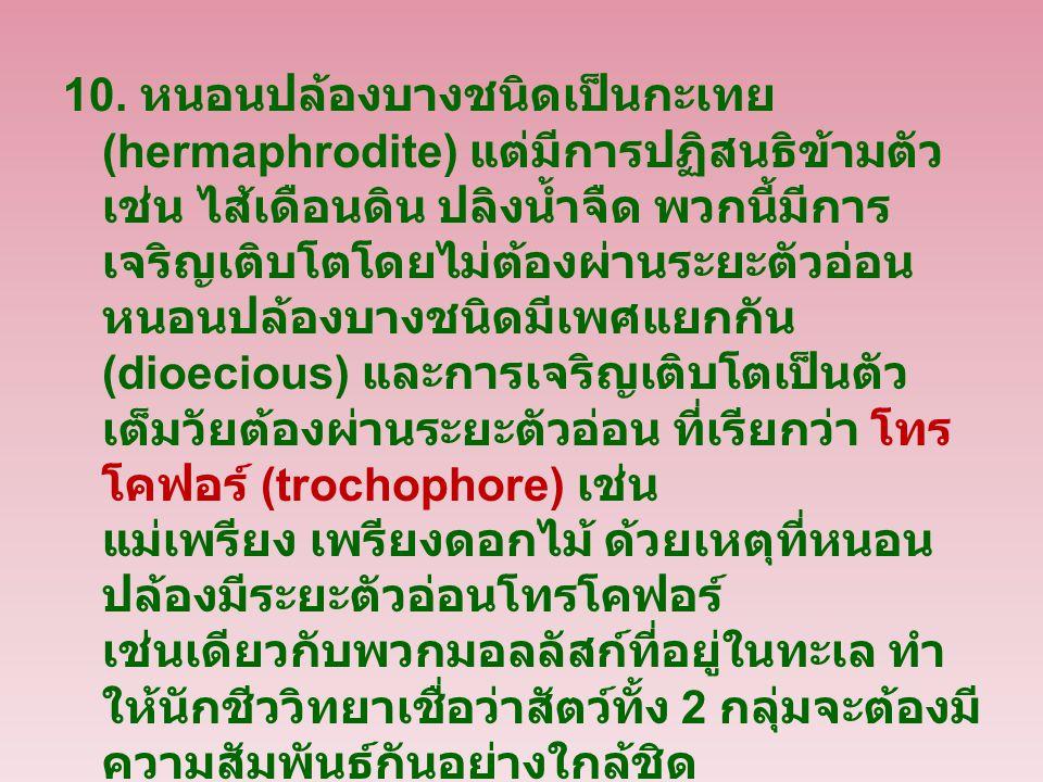 10. หนอนปล้องบางชนิดเป็นกะเทย (hermaphrodite) แต่มีการปฏิสนธิข้ามตัว เช่น ไส้เดือนดิน ปลิงน้ำจืด พวกนี้มีการ เจริญเติบโตโดยไม่ต้องผ่านระยะตัวอ่อน หนอน