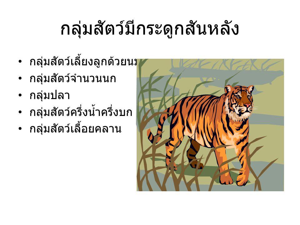 กลุ่มสัตว์มีกระดูกสันหลัง กลุ่มสัตว์เลี้ยงลูกด้วยนม กลุ่มสัตว์จำนวนนก กลุ่มปลา กลุ่มสัตว์ครึ่งน้ำครึ่งบก กลุ่มสัตว์เลื้อยคลาน