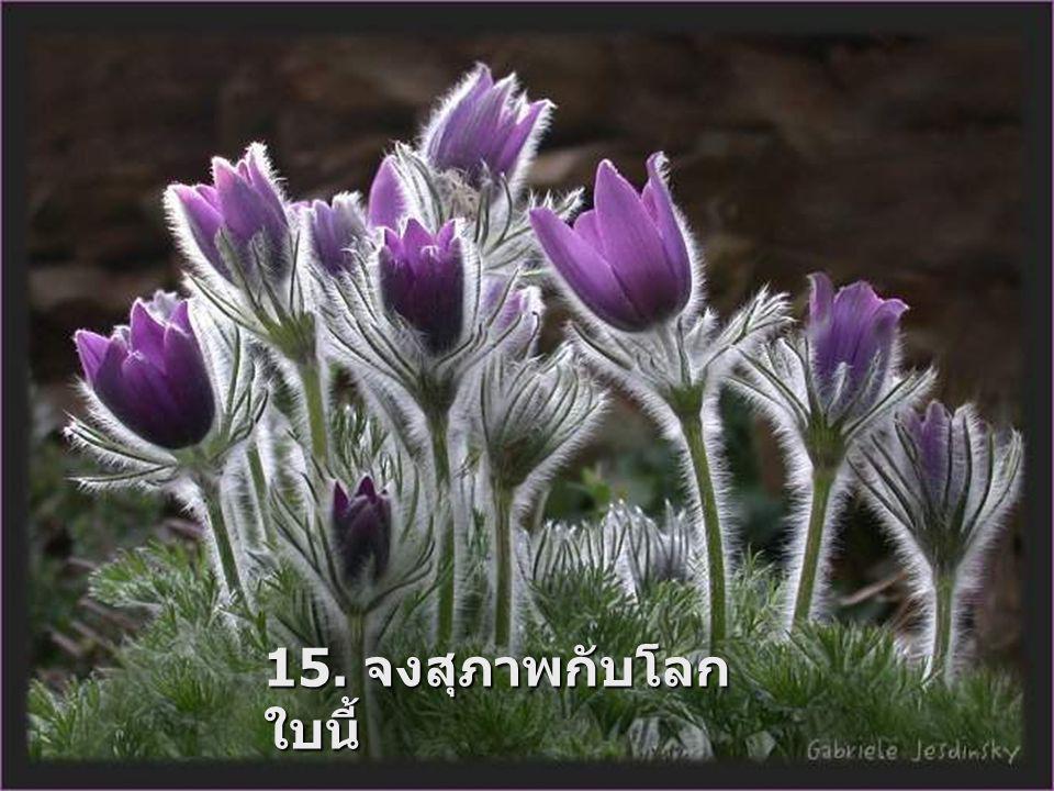 15. จงสุภาพกับโลก ใบนี้
