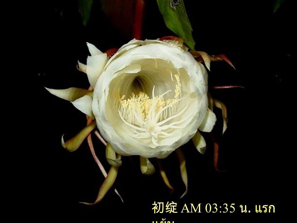 一朵昙花只开三个小时却用尽了它的一生生命的意义在于生命的质量而不在于生命的时间 TANHUA เบิกบานเพียง 3 ชม.