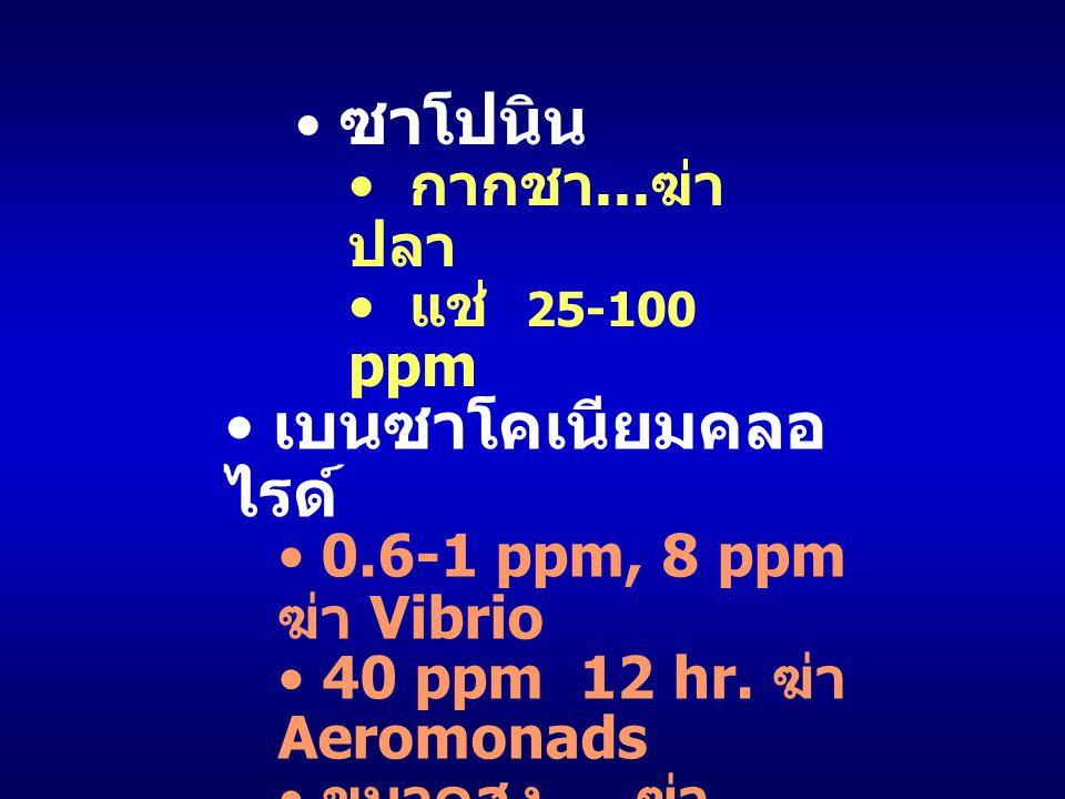 ซาโปนิน กากชา... ฆ่า ปลา แช่ 25-100 ppm เบนซาโคเนียมคลอ ไรด์ 0.6-1 ppm, 8 ppm ฆ่า Vibrio 40 ppm 12 hr. ฆ่า Aeromonads ขนาดสูง... ฆ่า แพลงค์ตอน - ลูกกุ