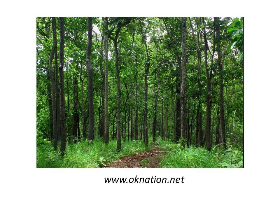 www.oknation.net
