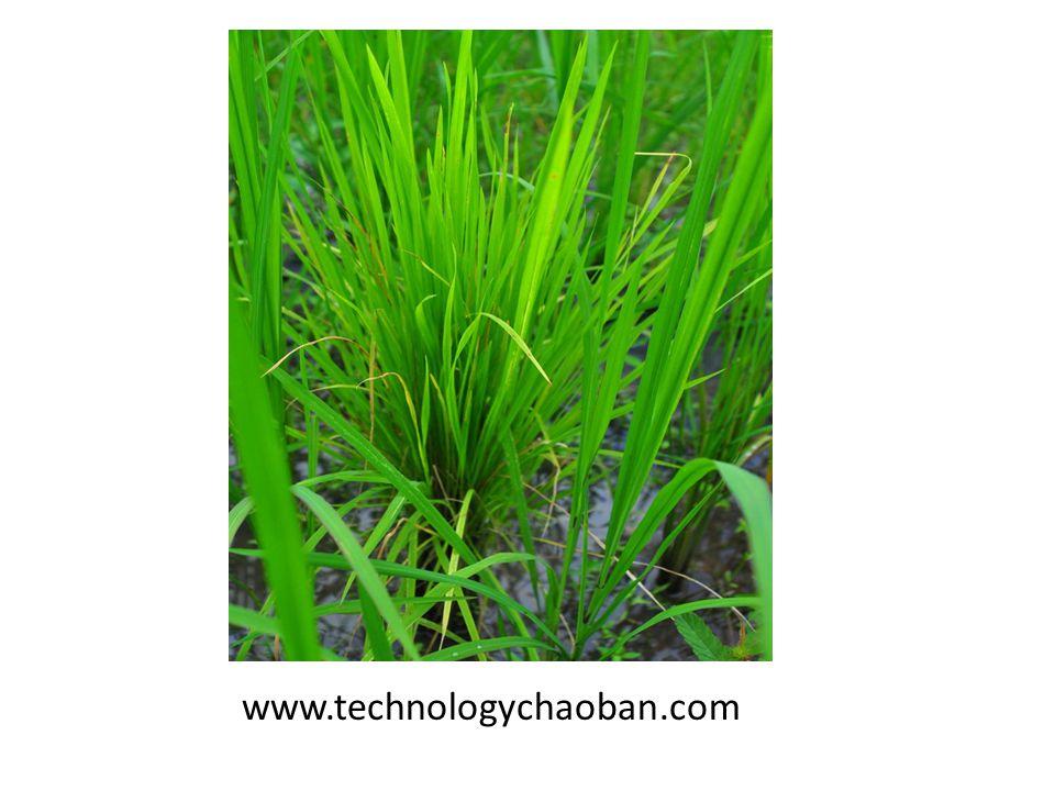 www.technologychaoban.com