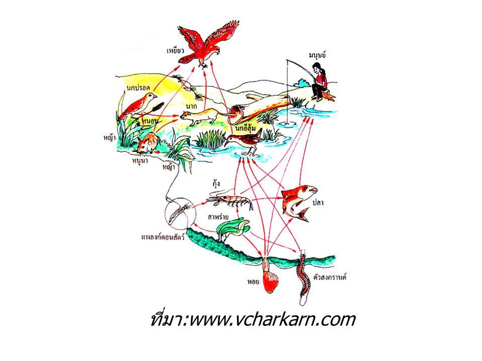 ที่มา :www.vcharkarn.com