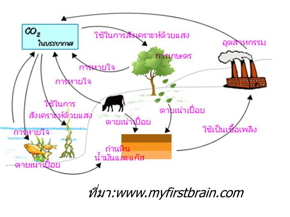 ที่มา :www.myfirstbrain.com