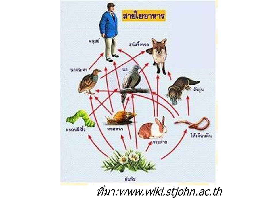 ที่มา :www.wiki.stjohn.ac.th