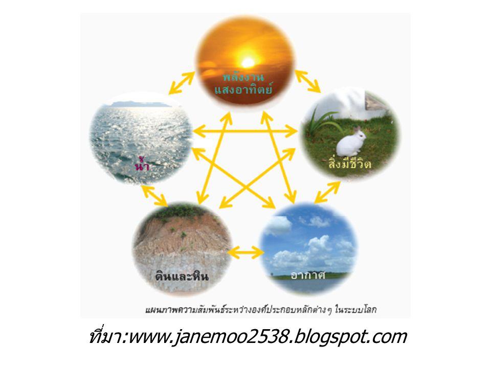 ที่มา :www.janemoo2538.blogspot.com