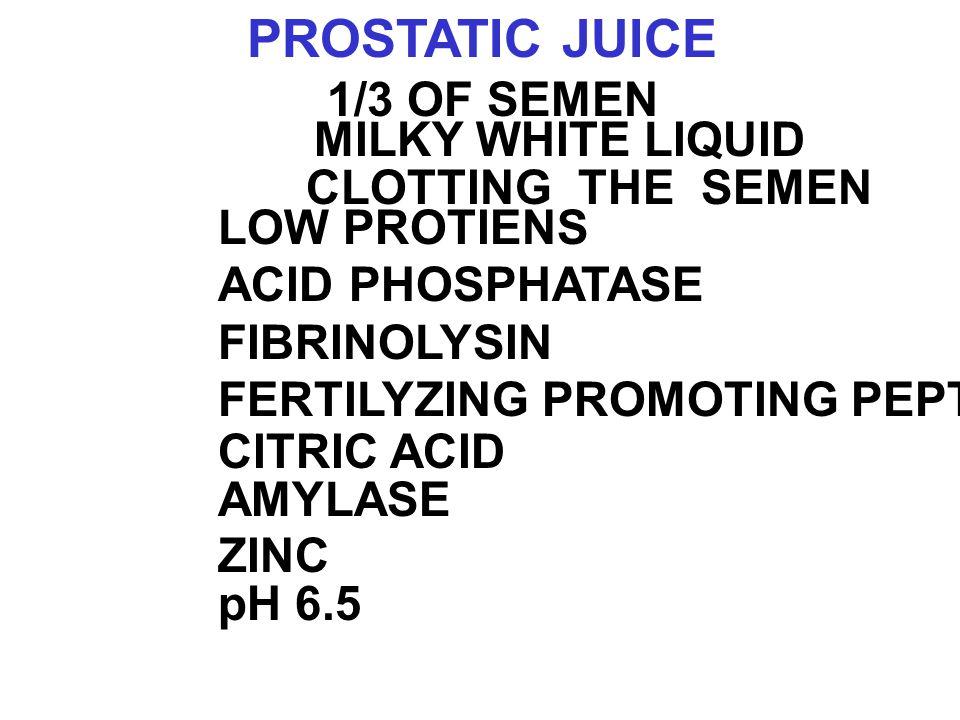 PROSTATIC JUICE 1/3 OF SEMEN MILKY WHITE LIQUID CLOTTING THE SEMEN LOW PROTIENS ACID PHOSPHATASE FIBRINOLYSIN FERTILYZING PROMOTING PEPTIDE(FPP) CITRIC ACID ZINC AMYLASE pH 6.5
