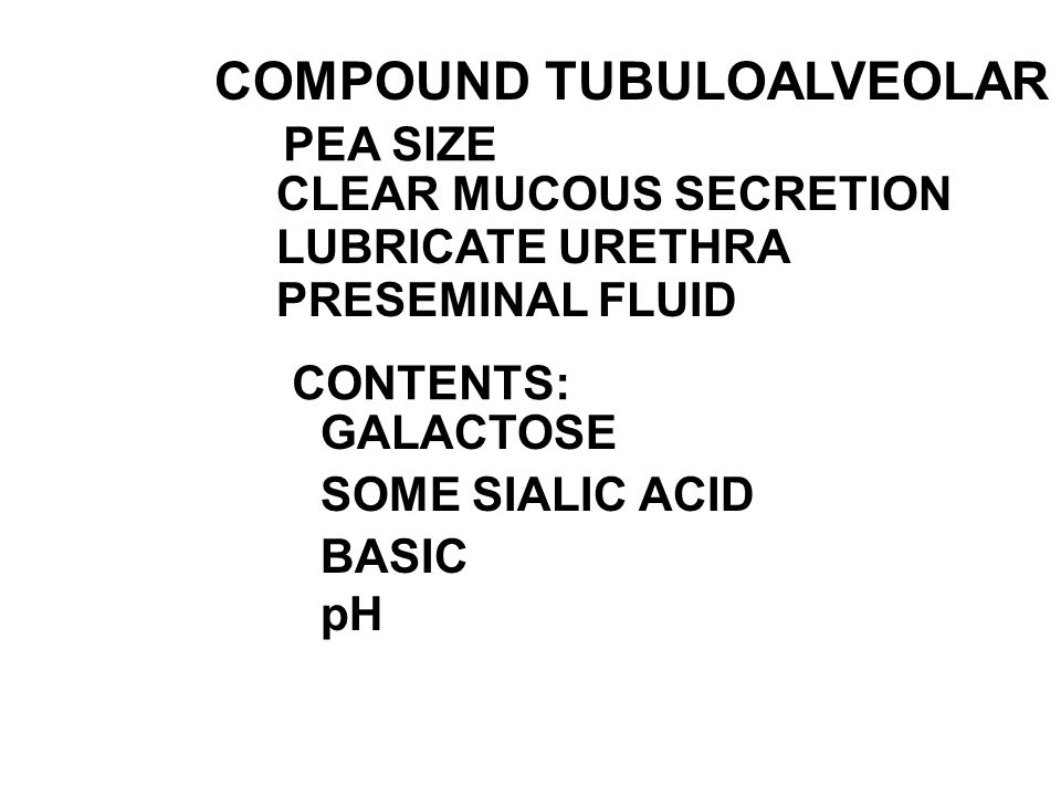 COMPOUND TUBULOALVEOLAR GLAND CLEAR MUCOUS SECRETION LUBRICATE URETHRA PRESEMINAL FLUID CONTENTS: GALACTOSE SOME SIALIC ACID BASIC pH PEA SIZE