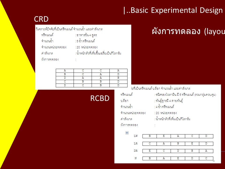 |..Basic Experimental Design Khon Kaen University Department of Animal Science CRD RCBD ผังการทดลอง (layout)