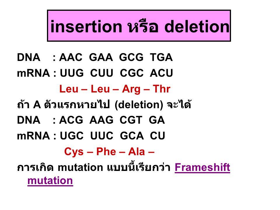 insertion หรือ deletion DNA : AAC GAA GCG TGA mRNA : UUG CUU CGC ACU Leu – Leu – Arg – Thr ถ้า A ตัวแรกหายไป (deletion) จะได้ DNA : ACG AAG CGT GA mRN