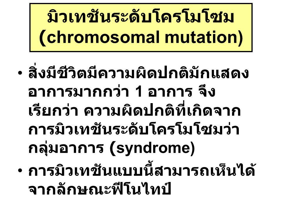มิวเทชันระดับโครโมโซม (chromosomal mutation) สิ่งมีชีวิตมีความผิดปกติมักแสดง อาการมากกว่า 1 อาการ จึง เรียกว่า ความผิดปกติที่เกิดจาก การมิวเทชันระดับโ