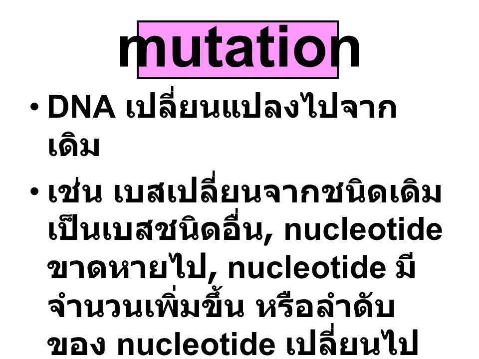 mutation DNA เปลี่ยนแปลงไปจาก เดิม เช่น เบสเปลี่ยนจากชนิดเดิม เป็นเบสชนิดอื่น, nucleotide ขาดหายไป, nucleotide มี จำนวนเพิ่มขึ้น หรือลำดับ ของ nucleot