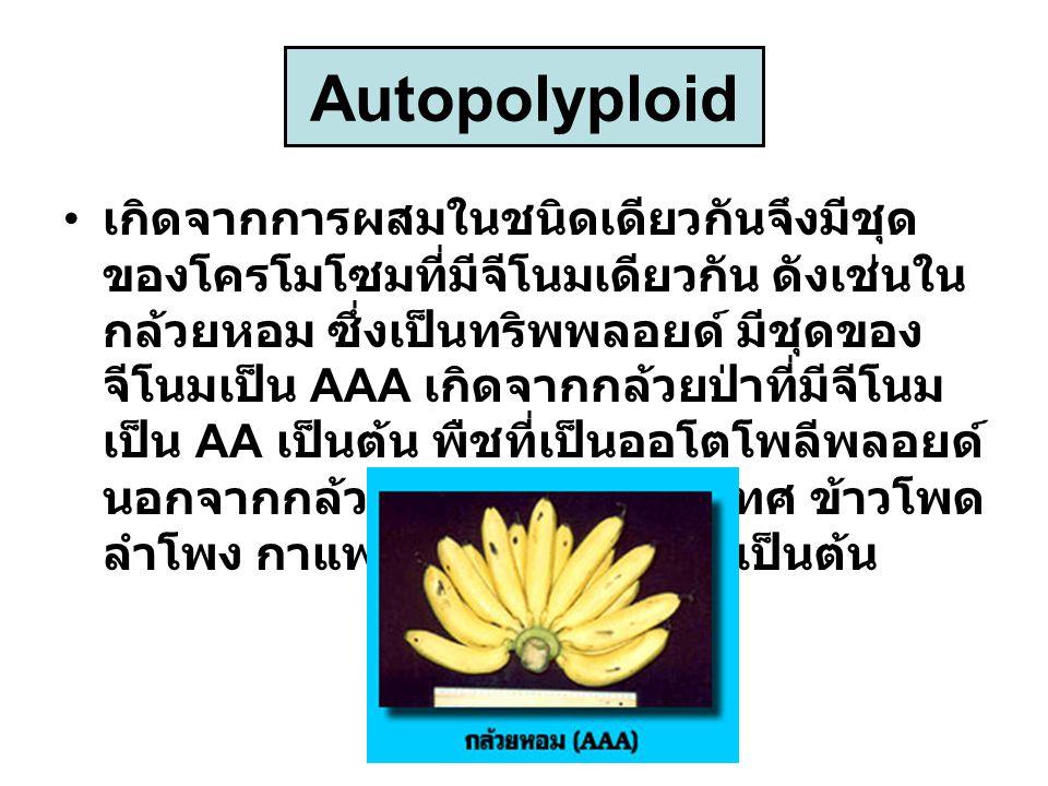 Autopolyploid เกิดจากการผสมในชนิดเดียวกันจึงมีชุด ของโครโมโซมที่มีจีโนมเดียวกัน ดังเช่นใน กล้วยหอม ซึ่งเป็นทริพพลอยด์ มีชุดของ จีโนมเป็น AAA เกิดจากกล