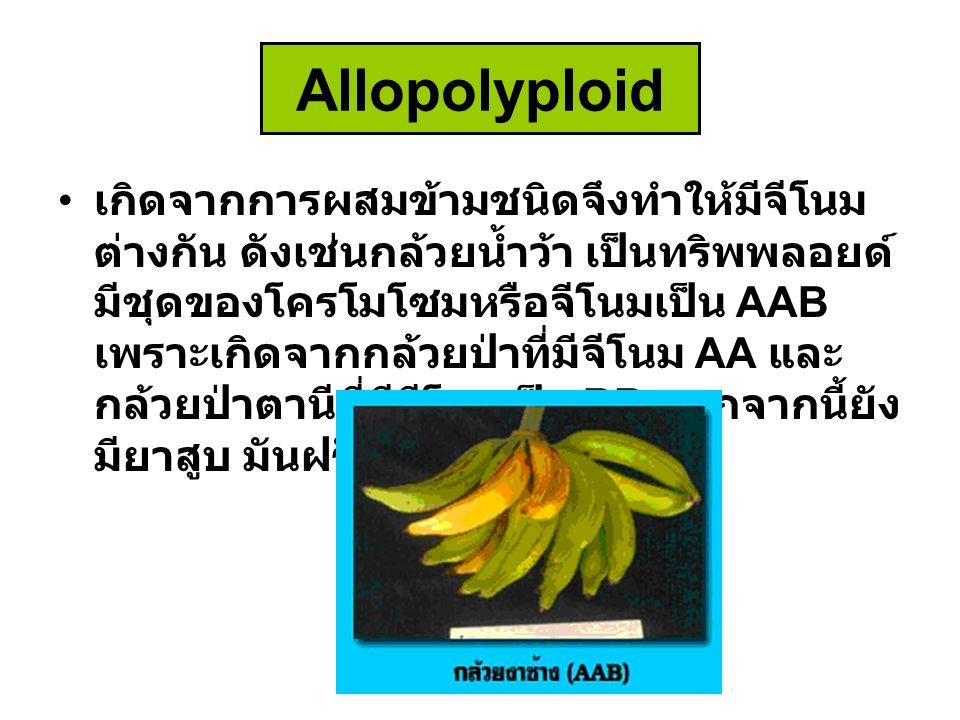 Allopolyploid เกิดจากการผสมข้ามชนิดจึงทำให้มีจีโนม ต่างกัน ดังเช่นกล้วยน้ำว้า เป็นทริพพลอยด์ มีชุดของโครโมโซมหรือจีโนมเป็น AAB เพราะเกิดจากกล้วยป่าที่