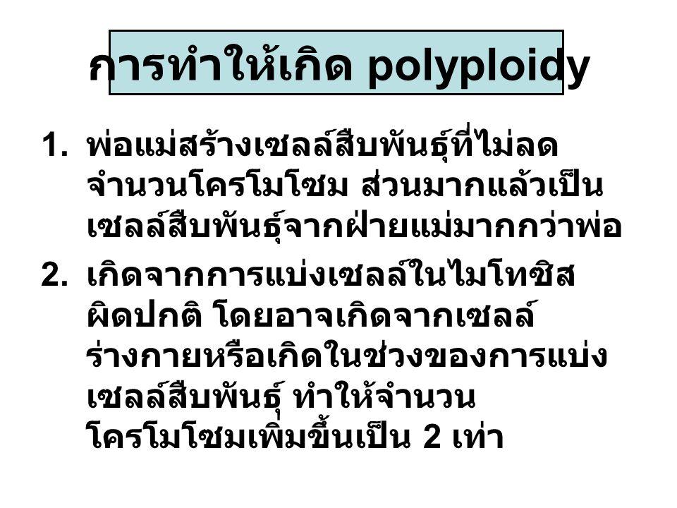 การทำให้เกิด polyploidy 1. พ่อแม่สร้างเซลล์สืบพันธุ์ที่ไม่ลด จำนวนโครโมโซม ส่วนมากแล้วเป็น เซลล์สืบพันธุ์จากฝ่ายแม่มากกว่าพ่อ 2. เกิดจากการแบ่งเซลล์ใน