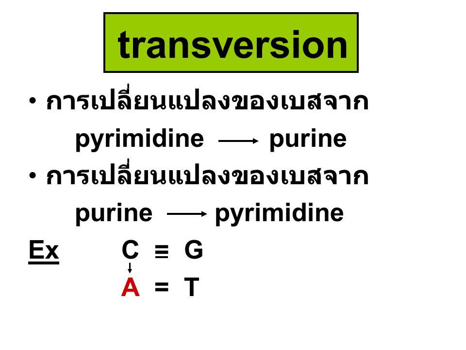 transversion การเปลี่ยนแปลงของเบสจาก pyrimidine purine การเปลี่ยนแปลงของเบสจาก purine pyrimidine ExC = G A = T