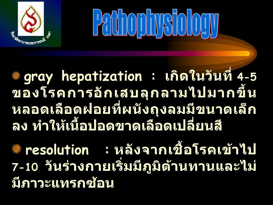 gray hepatization : เกิดในวันที่ 4-5 ของโรคการอักเสบลุกลามไปมากขึ้น หลอดเลือดฝอยที่ผนังถุงลมมีขนาดเล็ก ลง ทำให้เนื้อปอดขาดเลือดเปลี่ยนสี resolution :