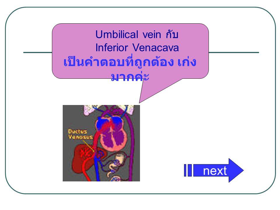 Umbilical vein กับ Inferior Venacava เป็นคำตอบที่ถูกต้อง เก่ง มากค่ะ next