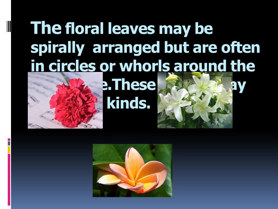 The floral leaves may be spirally arranged but are often in circles or whorls around the receptacle.These whorls may be of four kinds.