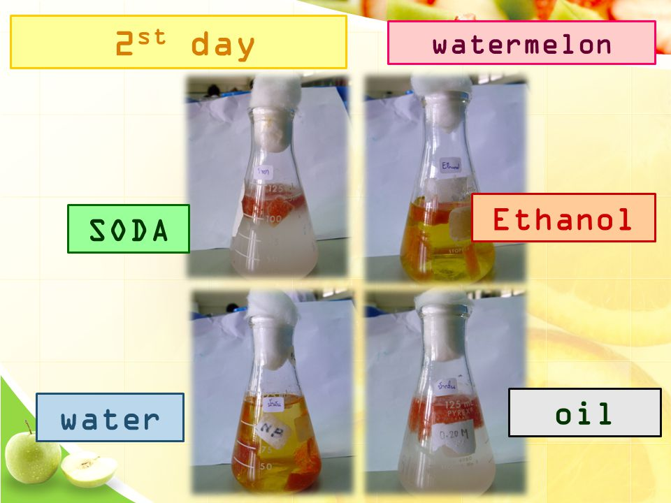2 st day SODA Ethanol water oil watermelon